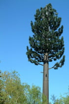 Faux sapin, vraie antenne