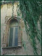 Fenêtre sous le saule