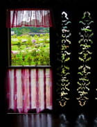 Fenêtre sur jardin