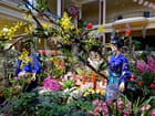 Festival des Orchidées 2015 (3)