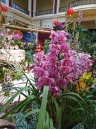 Festival des Orchidées 2015 (8)