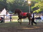 Festival equestre - Tarbes