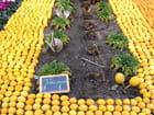 Fête des Citrons (2)