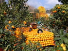 Fête des Citrons (24)
