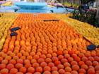 Fête des Citrons (3)