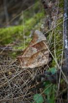 Feuille morte ou papillon?
