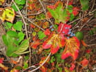 Feuilles d'automne à Vernon