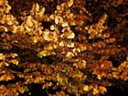 Feuilles d'automne en flagrant délit de FLASH...