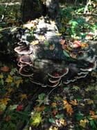 Feuilles d'automne et champignons