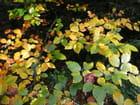feuilles dans le soleil d'automne
