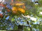 Feuilles et reflets sur l'eau