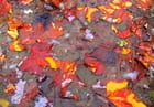 feuilles gelées