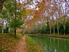 Feuilles rousses sur les berges du canal