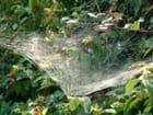 Filet d'araignée au soleil du matin