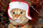 Fiona, joue le père Noël et vous souhaites de bonnes fêtes, Vive 2012