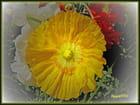 Fleur:  Avignon