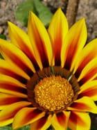 Fleur colorée