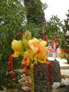 Fleur d'acacia d'Istambul 2