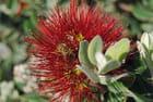 Fleur de crête