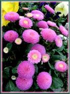 Fleur de Martigues