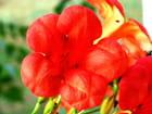 Fleur de Nimes
