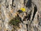 Fleur esseulée