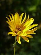 Fleur et contrastes