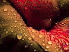 Fleur et pluie couleur
