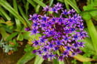 Fleur étoilée