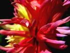 Fleur étrange