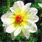 Fleur façon peinture