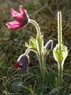 Fleur fragile