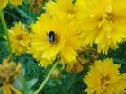 Fleur Insecte