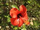 Fleur javea