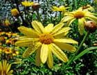 Fleur perlée