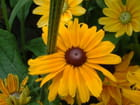 Fleur piquée