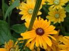 Fleur piquée et ses copines