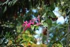 fleur sauvage de La Réunion
