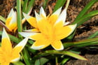 Fleure de printemps