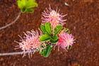 fleure du sud