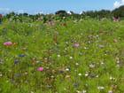 Fleurettes en Bretagne