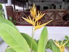 Fleurs (1)