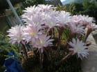 Fleurs 5 jours par an!