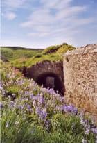 Fleurs au chateau