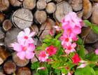 Fleurs au stère