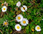 Fleurs courage .......