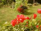 fleurs d'aout 2012