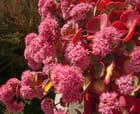 Fleurs d'octobre