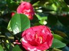 fleurs d'un arbuste du printemps