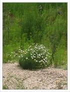 Fleurs dans terrain en friche